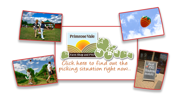 PYO Updates at Primrose Vale Farm Shop & PYO