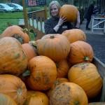 Pumpkins at shop